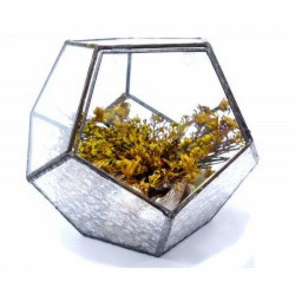 Väike klaasist maailm – taimeterraarium